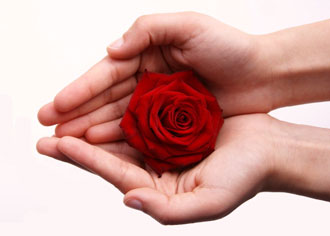 Hands holding red rose